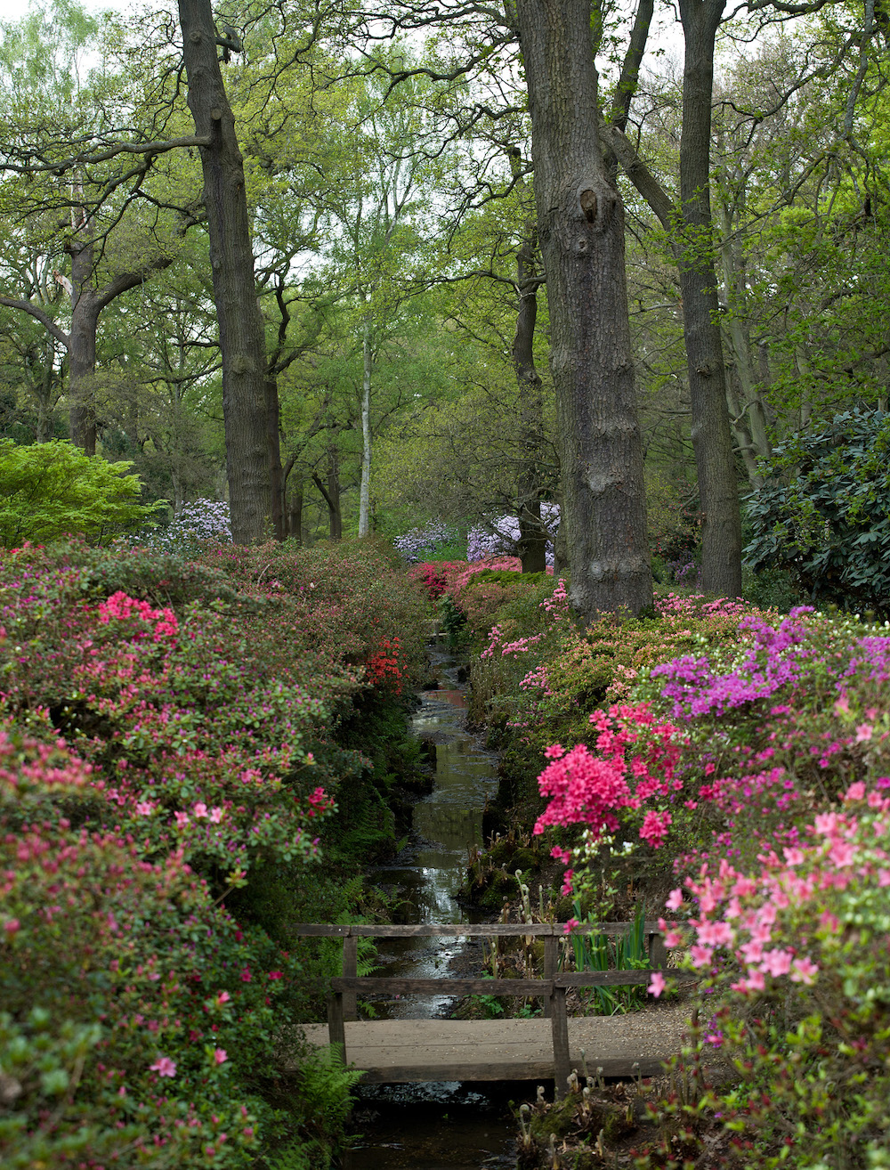 Royal Park in London: Isabella Plantation at Richmond Park. Photo Credit: © Diliff via Wikimedia Commons.